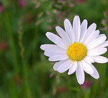 Bloemen, het hele jaar rond by steppeland