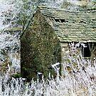 """Frozen"" by Bradley Shawn  Rabon"