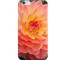Pretty Peach Dahlia iPhone Case/Skin