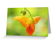 Jewelweed (Impatiens Capensis)  Greeting Card