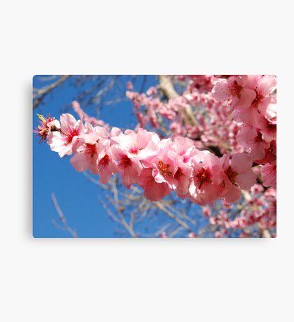 Blossom Spear Canvas Print