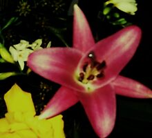 Flushed Flower by monica98