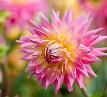 Pretty Dahlia by Carolyn Eaton