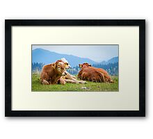 Cows in a mountain landscape Framed Print