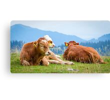 Cows in a mountain landscape Canvas Print