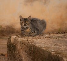 Defiant cat by jhawa