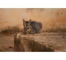 Defiant cat Photographic Print