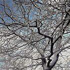 WINTER TREE by Spiritinme