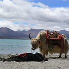 yak by the lake by noonionplease
