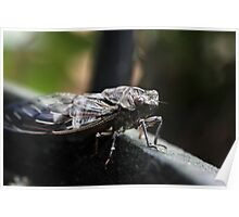 Cicada Macro. Poster