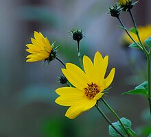 The yellow one... by Adrian Bud
