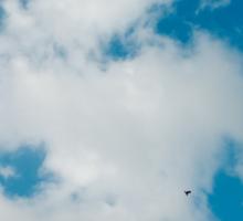 sky, cloud and birds Sticker