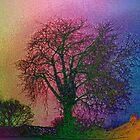 Bare Trees  by blamo