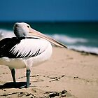 pelican watch by hellsbell