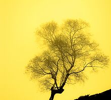 Gold Tree by Isard