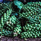 Sprouts for tea... err maybe not by Simon Duckworth