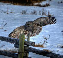 Landing Great Gray Owl and Snow Wildlife Raptor II by Skye Ryan-Evans