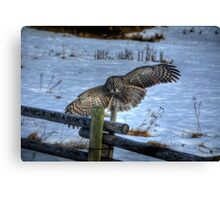 Landing Great Gray Owl and Snow Wildlife Raptor II Canvas Print