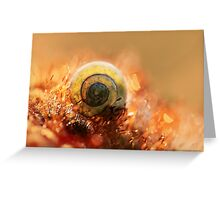 Morning impression with small shell Greeting Card