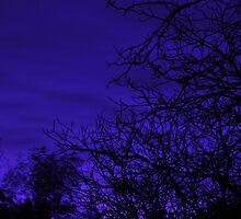 Indigo Twilight by LavenderMoon