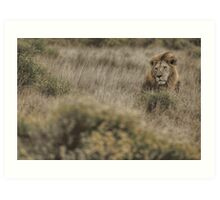 King in the Grass Art Print