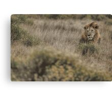 King in the Grass Canvas Print