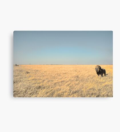 Solitary Beast Canvas Print