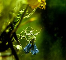 as the flower withers V by CadavreExquis