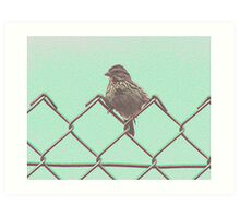 Baby sparrow sitting on a wire fence Art Print