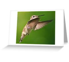 Hovering Hummer Greeting Card