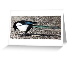 Magpie Having a Snail. Greeting Card