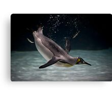 little diver Canvas Print