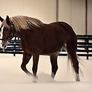 Horse in Snow by Mary Ann Reilly