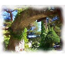 Winery Gateway Photographic Print