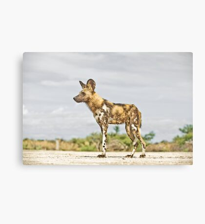 Deathly Stare Canvas Print