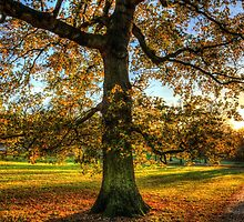Greenwich Park London by DavidHornchurch