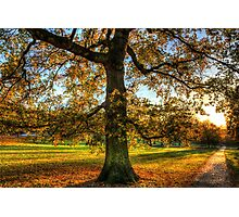 Greenwich Park London Photographic Print
