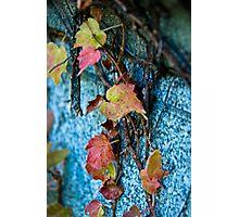 Fall Vines Photographic Print