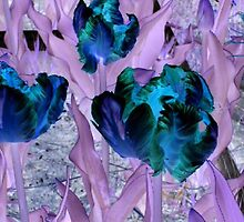 blue parrot tulips by boondockMabel