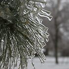 Pine needles in ice by Tina Billhymer