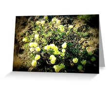 yellow weedy flowers  Greeting Card