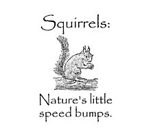 Squirrels Speed Bumps Photographic Print