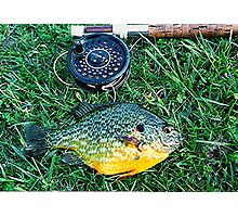 Pumpkinseed sunfish caught on a fly Photographic Print