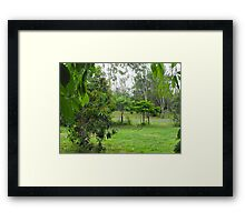 Leaves of Casamoira Frame More Trees Framed Print