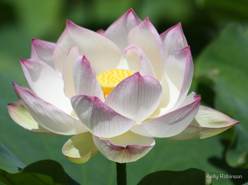 Full Bloom by Kelly Robinson