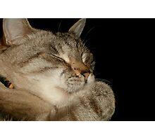 Hershey: Sleep Photographic Print