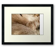 Hershey: Colors & Textures Framed Print