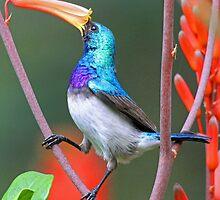 Enjoying the nectar! by jozi1