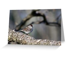 Wild Bird Art Chipping Sparrow Greeting Card