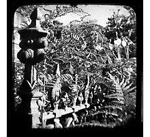 Fence & Garden Photographic Print